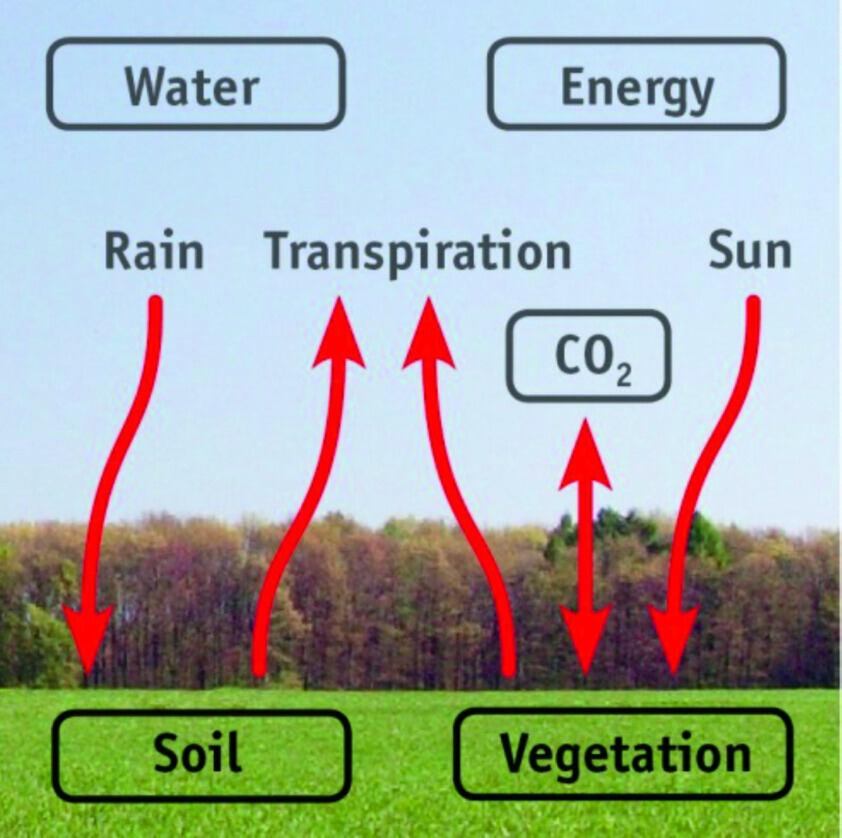 Graphic of Energy, CO2, and water fluxes